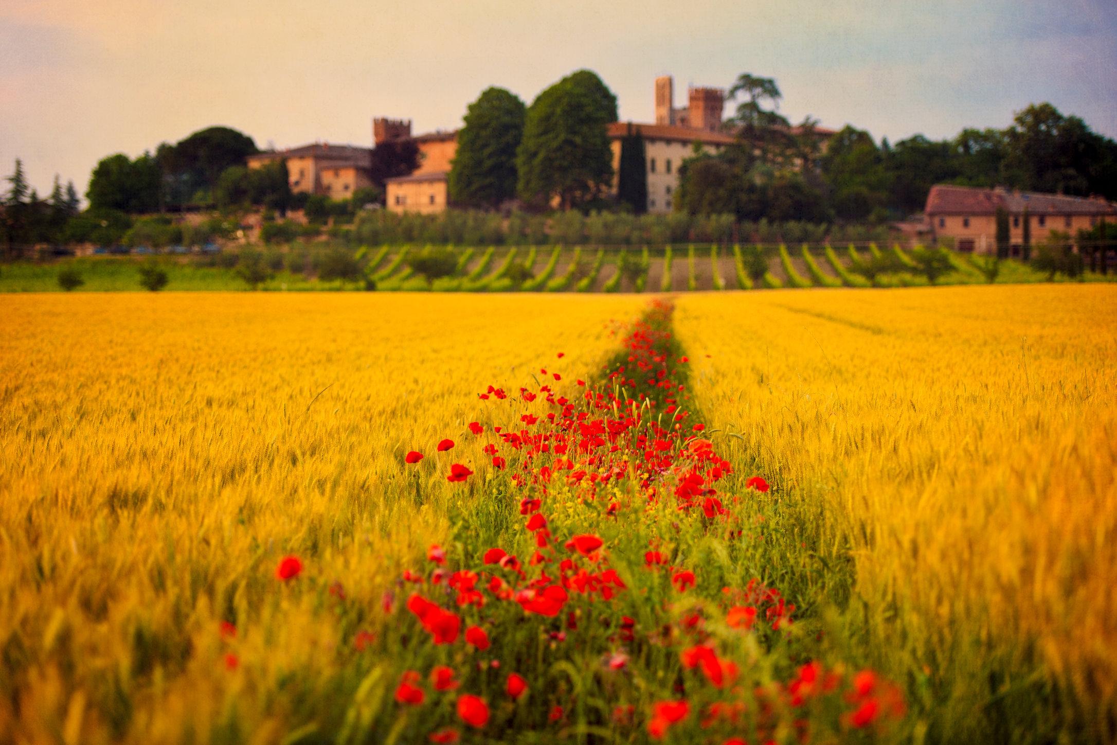 Tuscany Dreamland Hi Res.jpg
