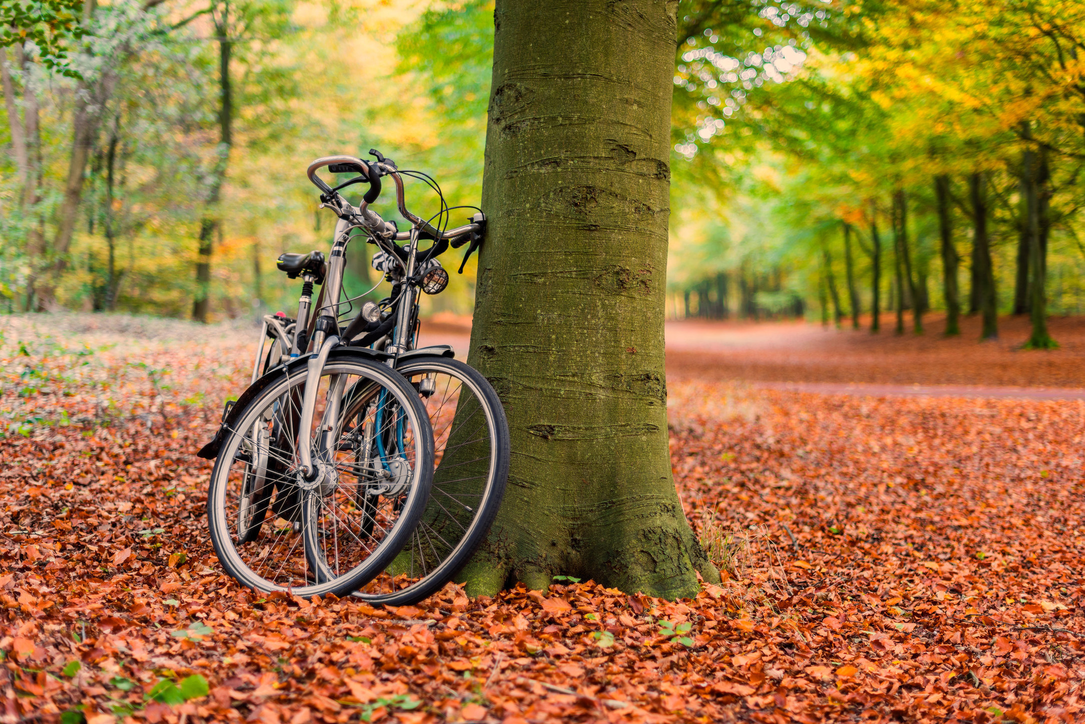 Fall Forest Bikes Hi Res.jpg