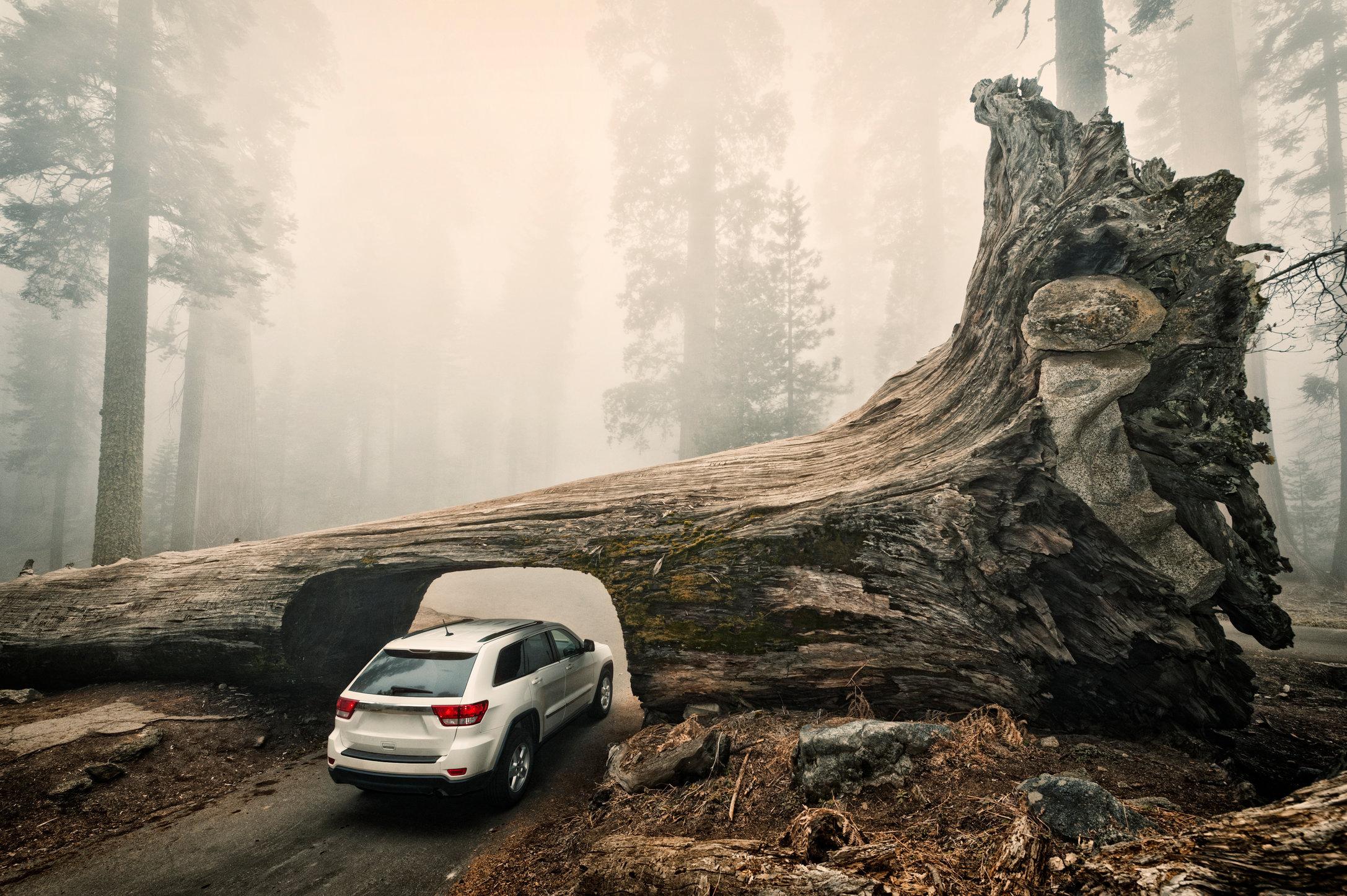 Sequoia Down No Tags Hi Res.jpg