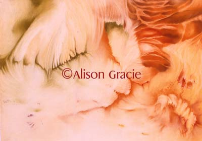 Caterpillar Cove by Alison Gracie