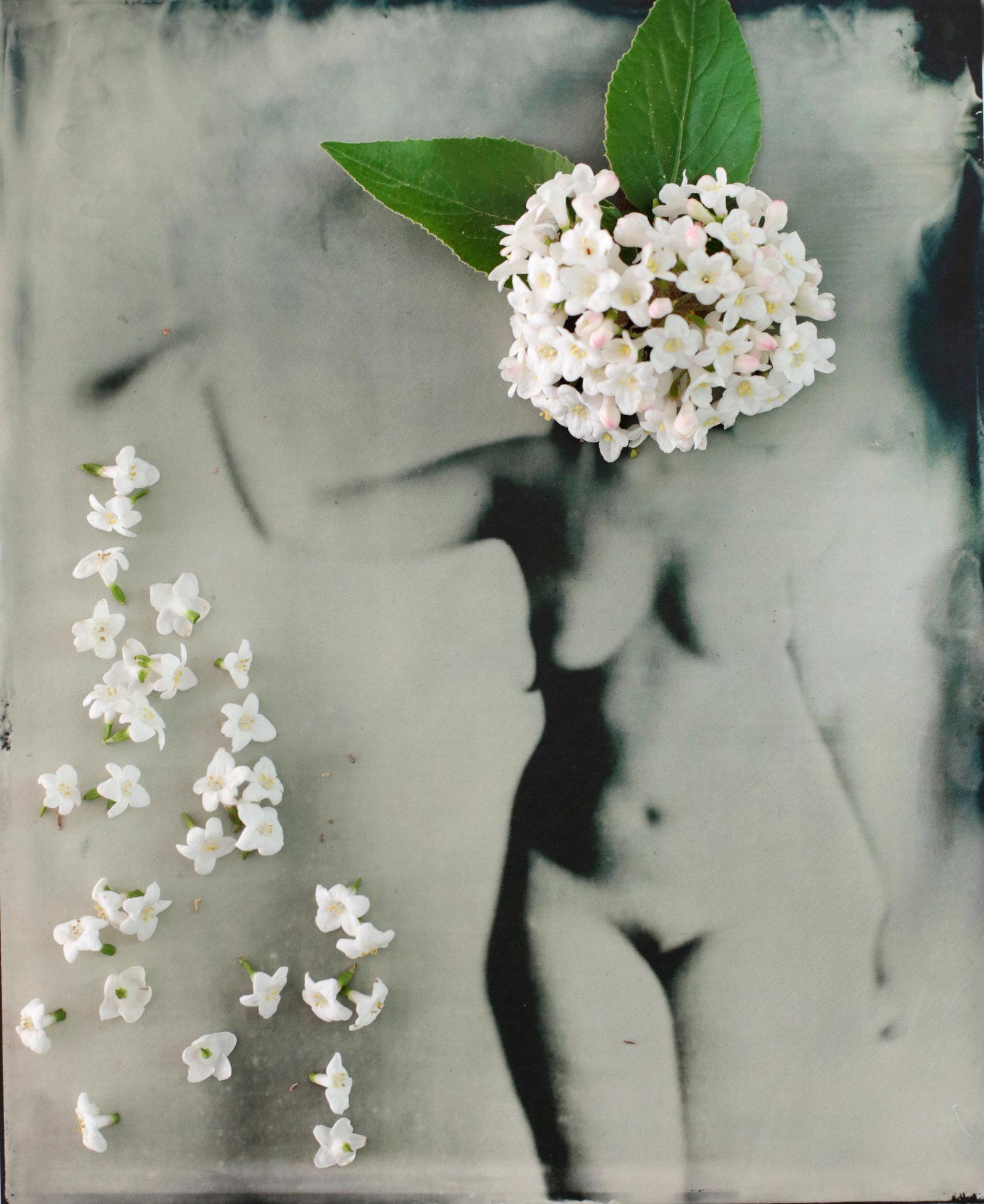 FLOWERS_1_011.JPG