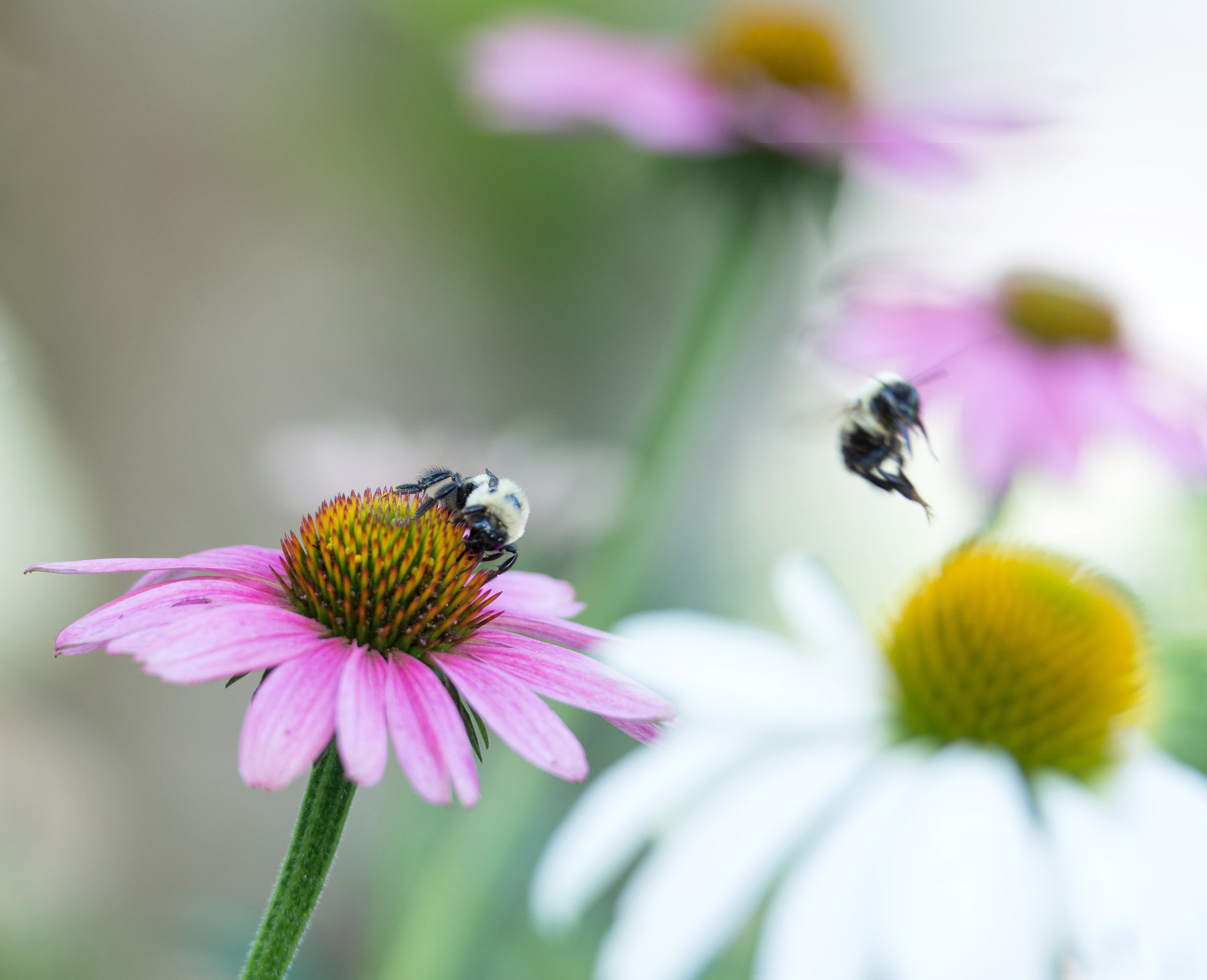 bees-3307a.jpg