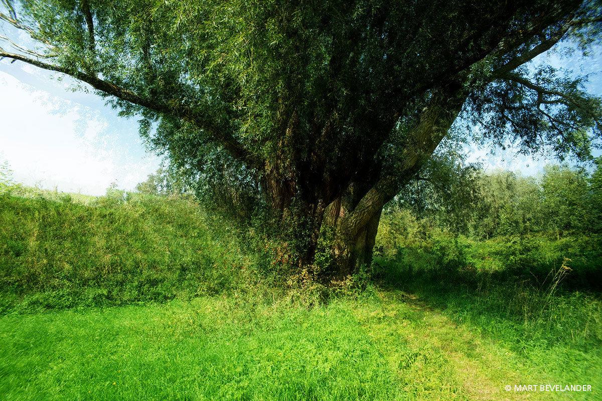 Vier maal dezelfde boom