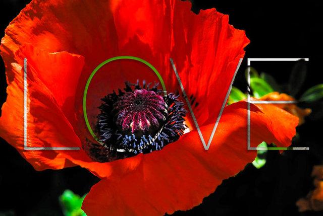 poppy_0014.jpg