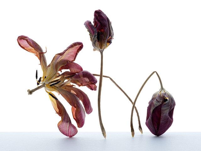 Flower6berab.jpg