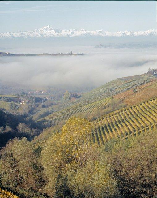 Italian Vendemia 50 landscape#6