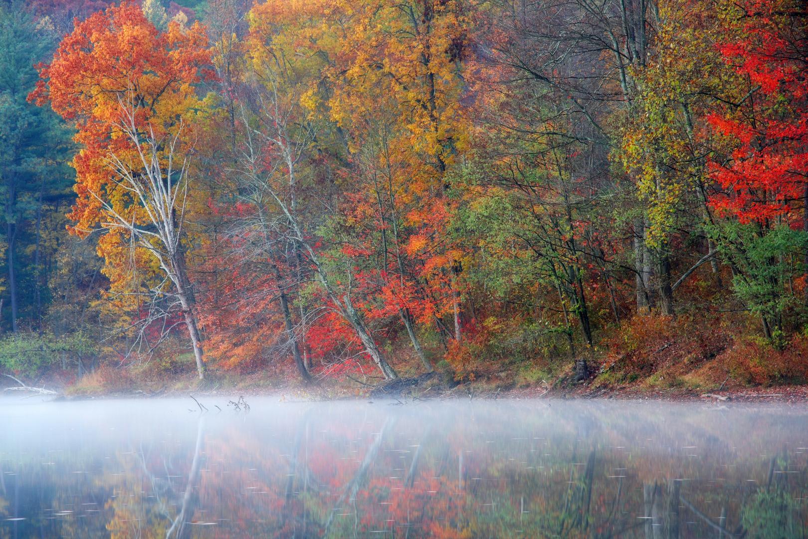 Autumn, Tar Hollow State Park, Ohio;