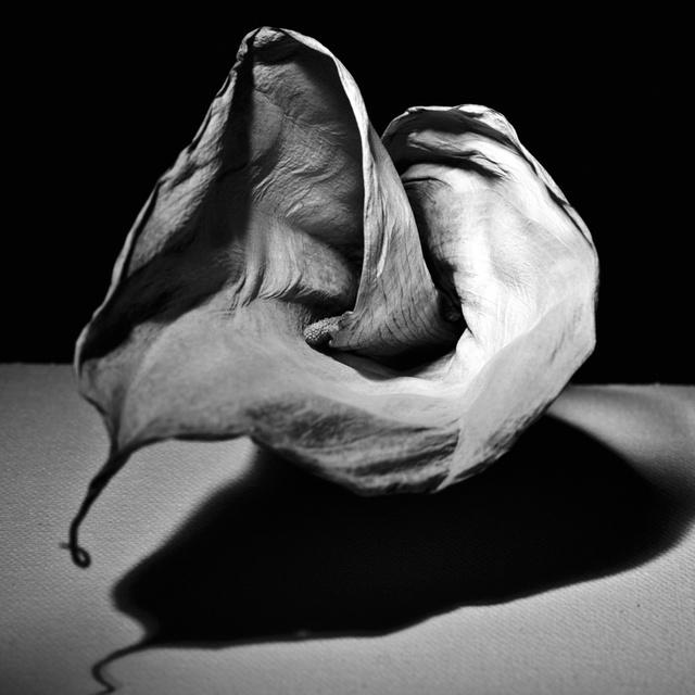 Dead Flower. New York, 2009 (Study #9)
