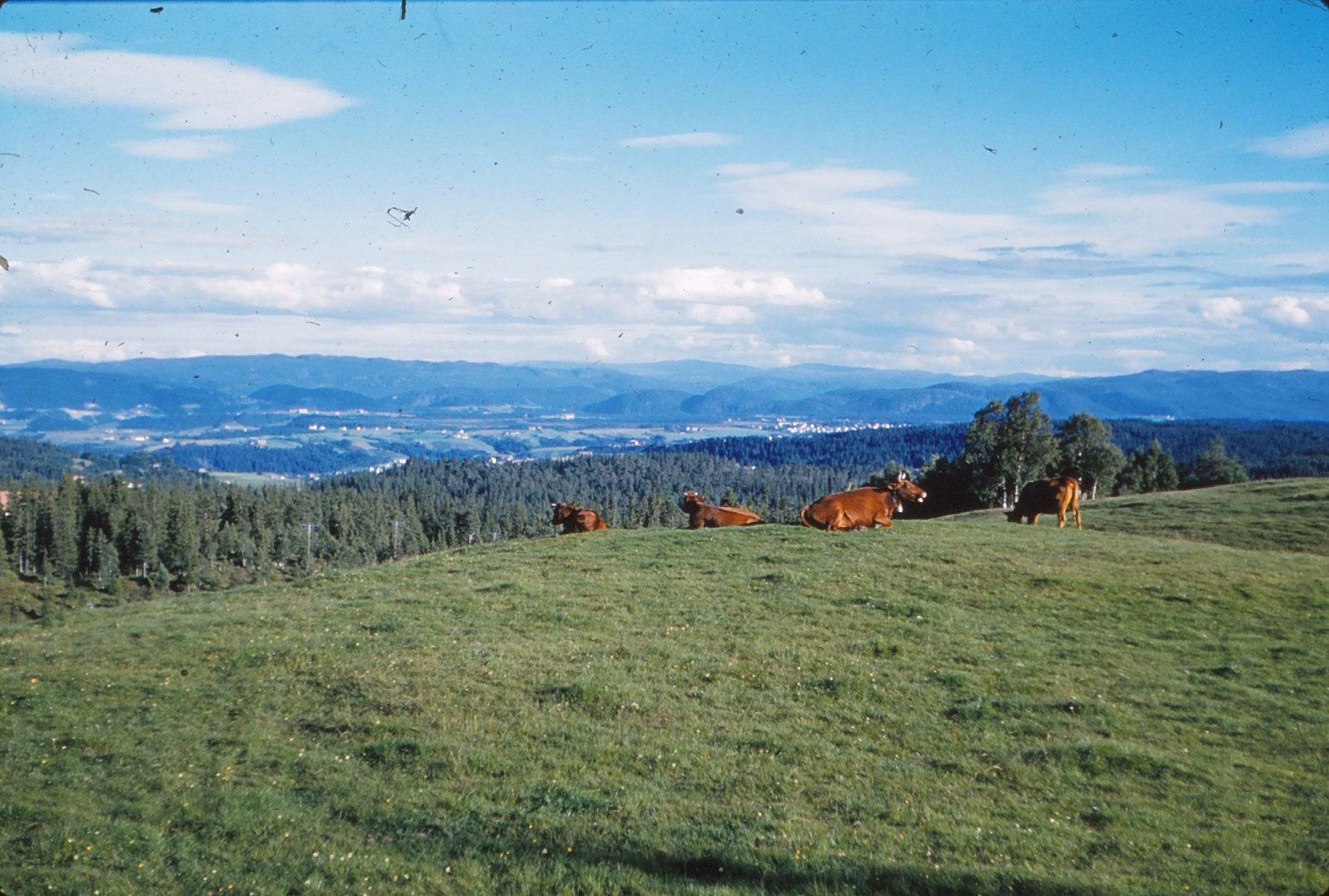 1154 (4) Landschap even buiten Trondheim, te bereiken met Gråkalbaan