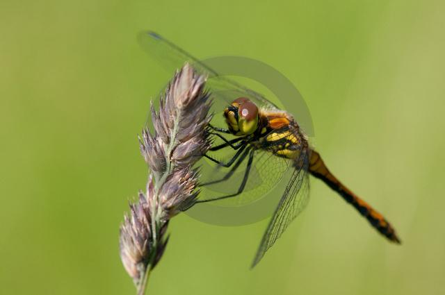 Insekten_Copyright_372.jpg