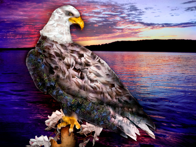 eagle4final.jpg