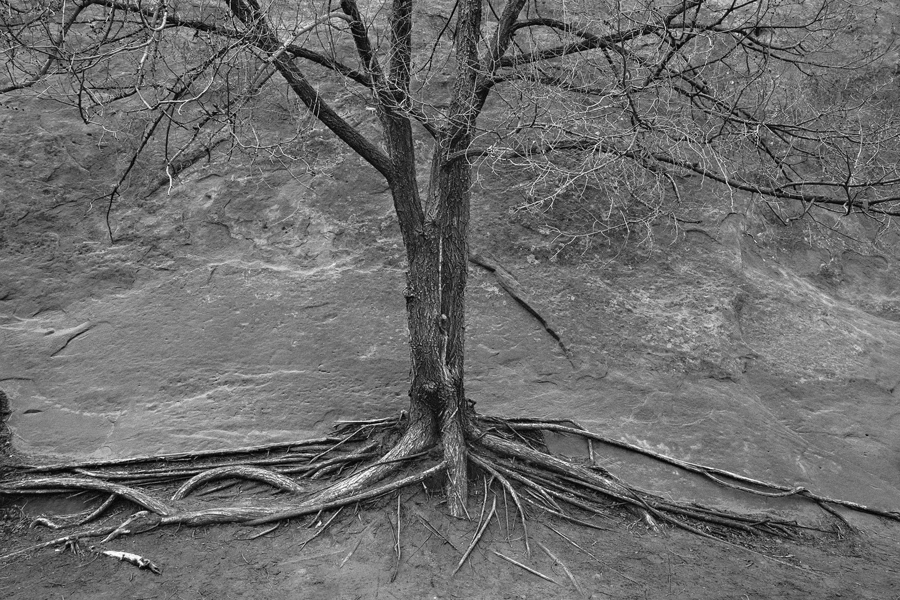 colorado-springs-landscape-black-and-white031.jpg