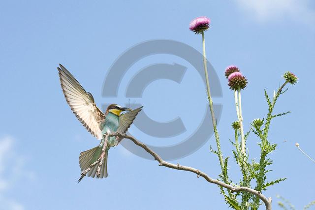 Tiere-Vögel-5.jpg