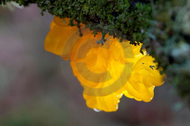 Farben-Formen_Copyright_127.jpg