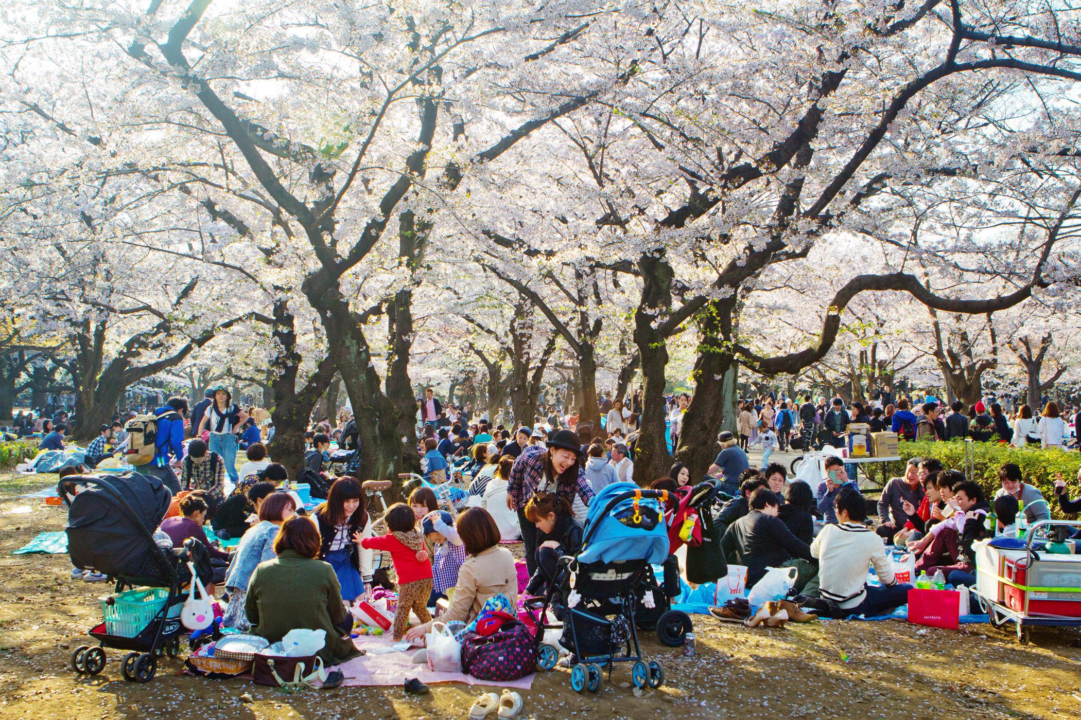 Tokyo Inspired Picnics