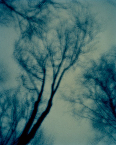 Midnight Trees, New Jersey, 2009