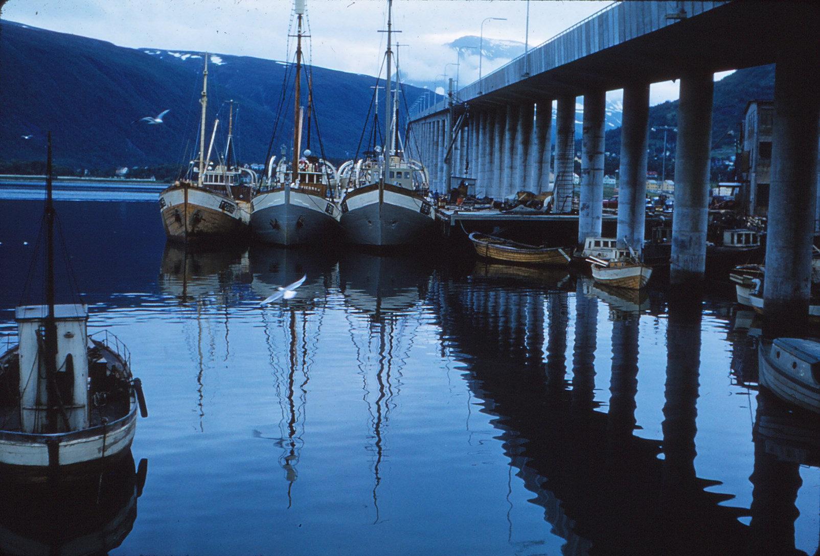 884 (33) Brug Tromsø, opvliegende vogel A