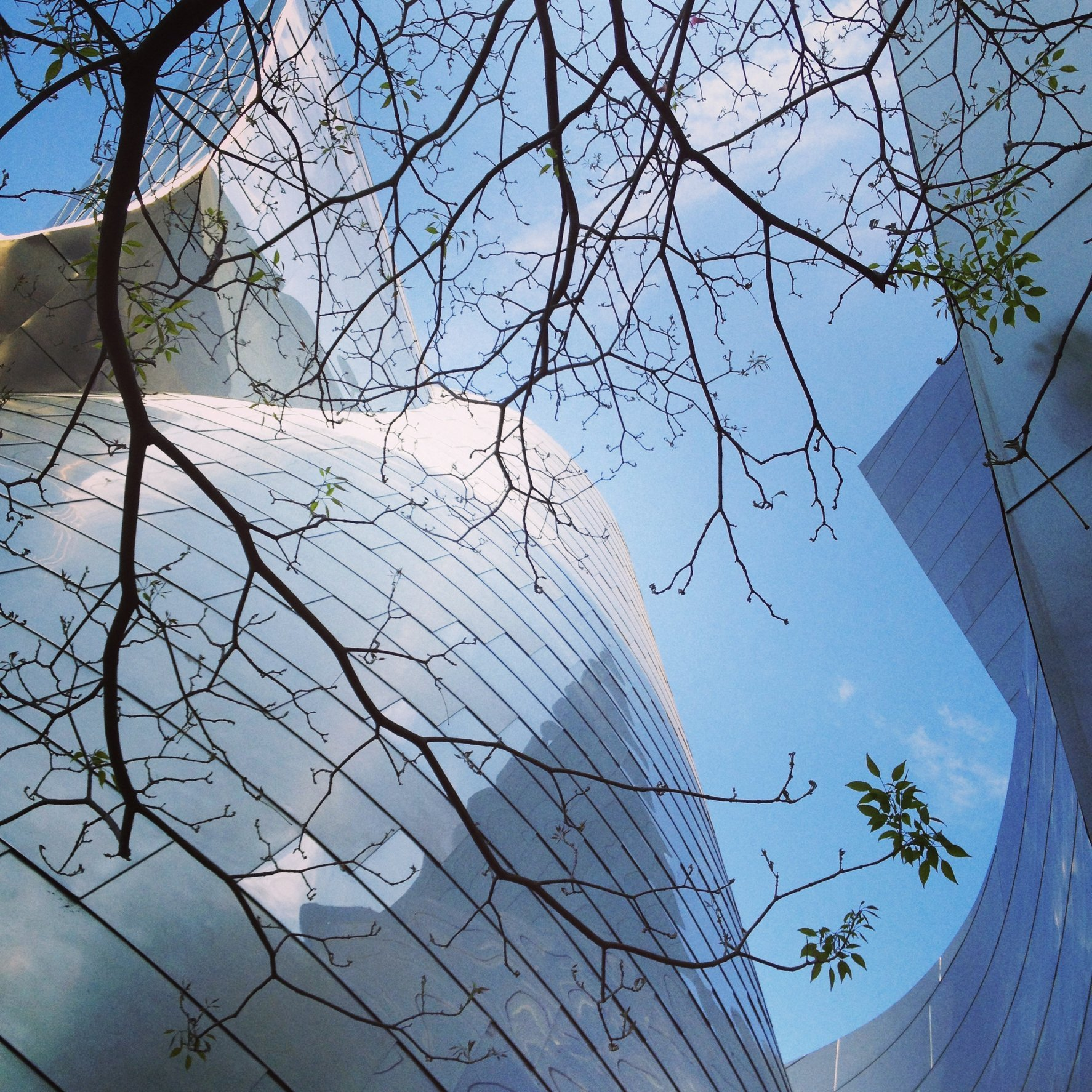 WALT DISNEY CONCERT HALL - BLUE 23