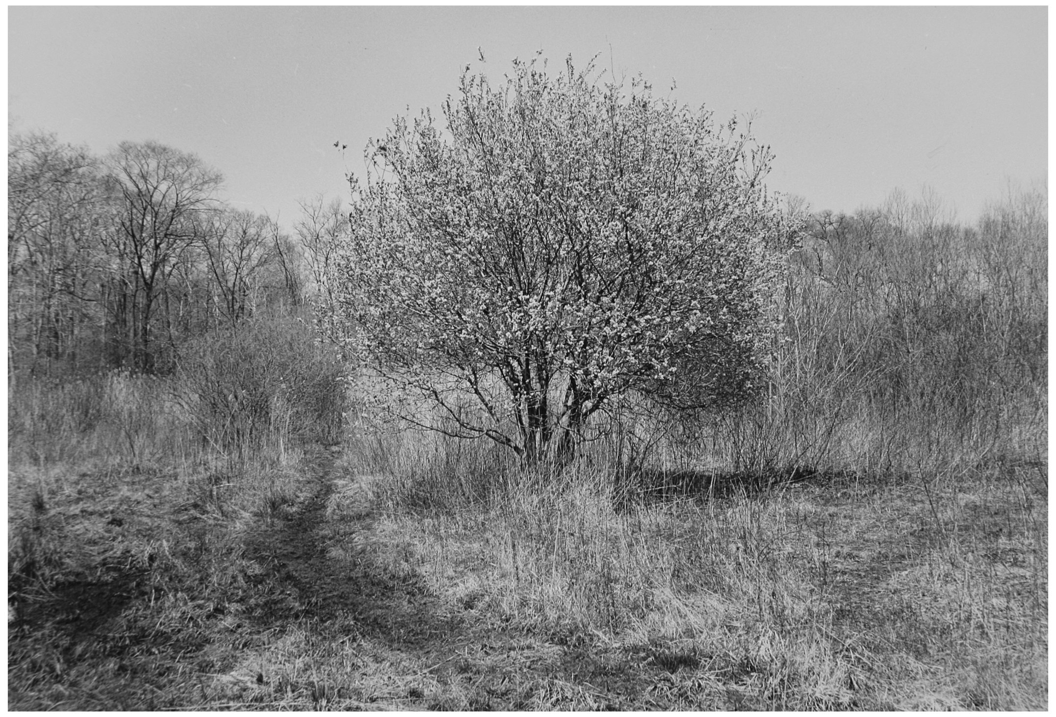 Trees  15.jpg