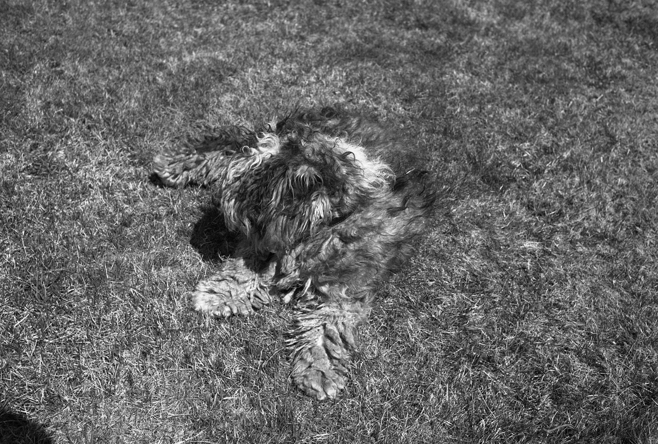 dog in grass.jpg