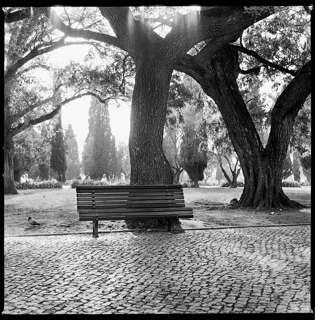 Jardim de Belém ©Tobi Asmoucha.jpg