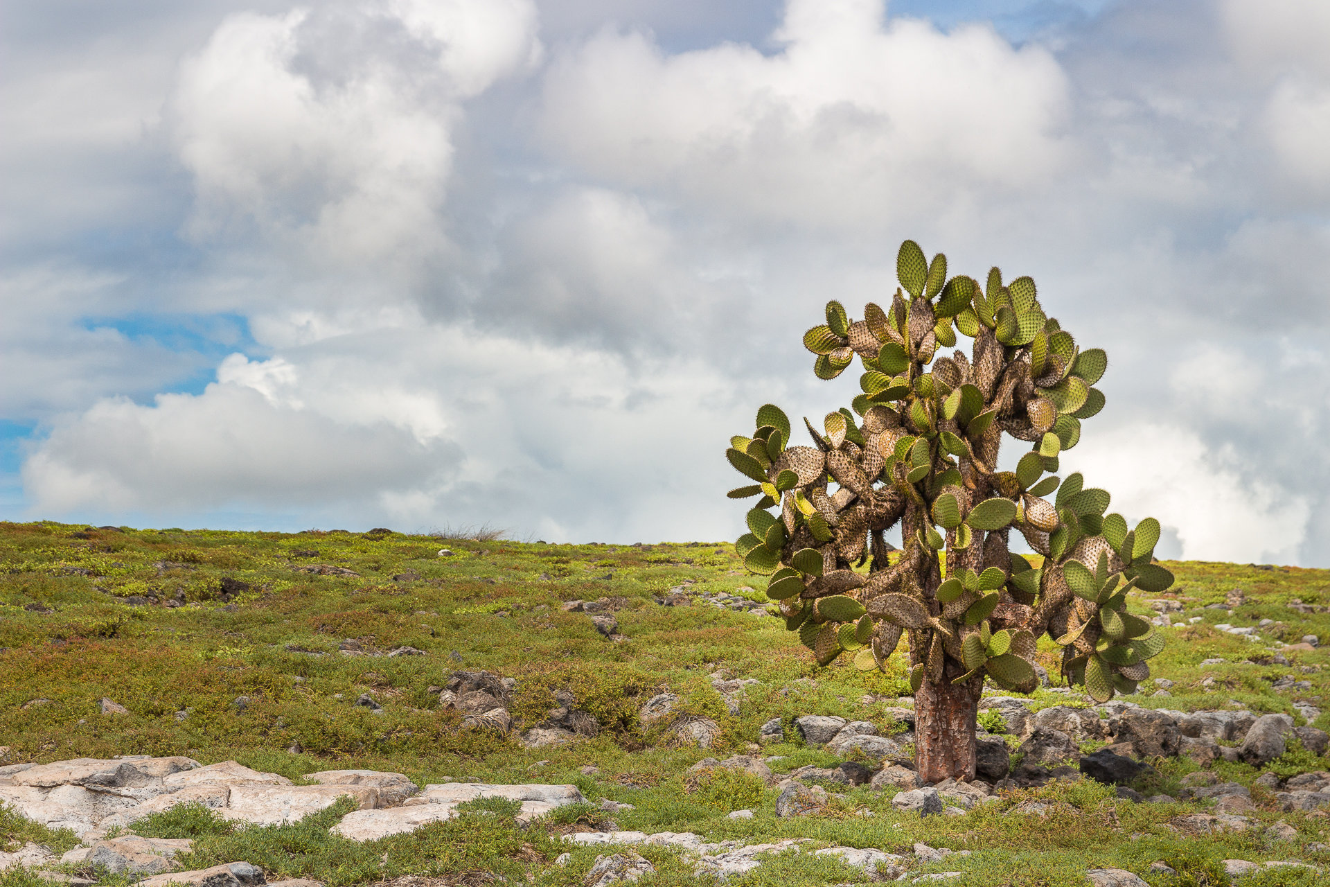150419_Galapagos-1242.jpg
