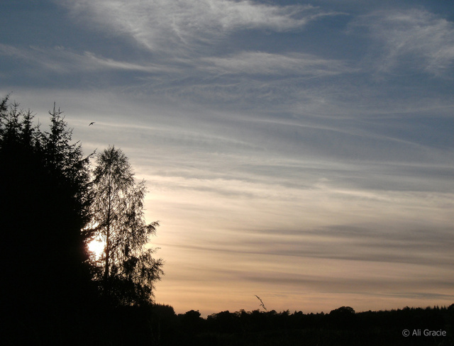 Early Evening by Alison Gracie
