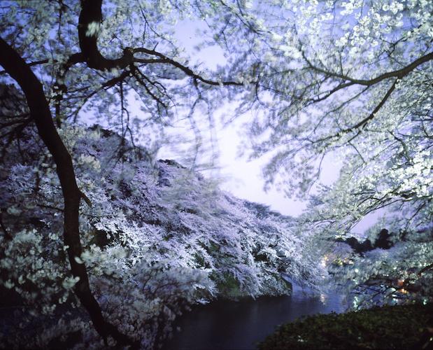 Sakura Festival, Tokyo.-34-1.jpg