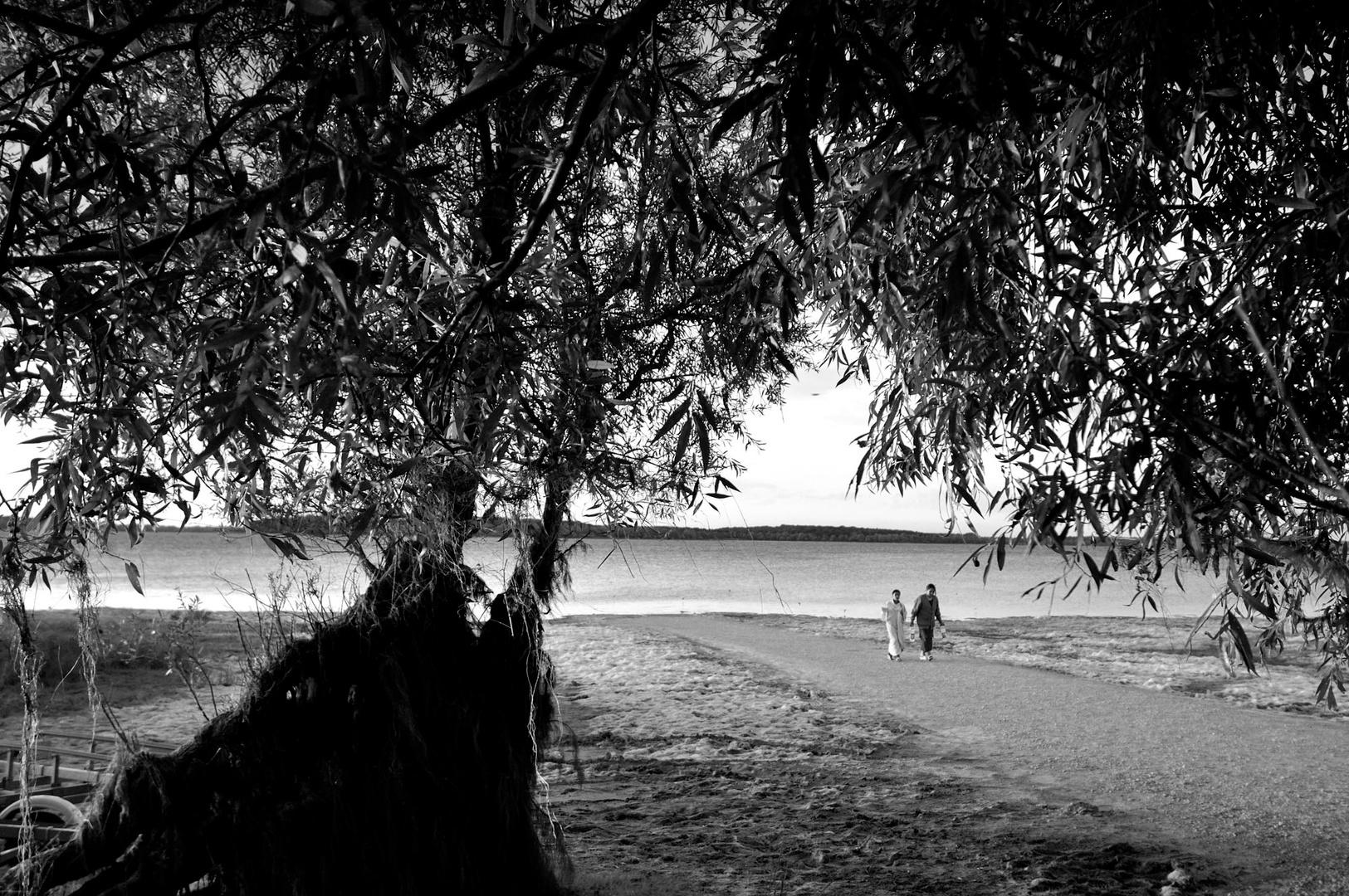 Lac de la forêt d'Orient, Aube, 2007