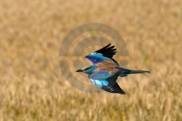 Tiere-Vögel-44.jpg