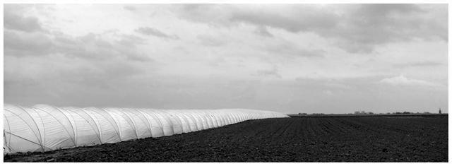 agricultural landscapes no 4.jpg