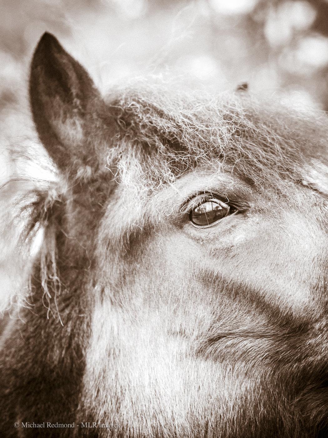 HorseEye-3161.jpg
