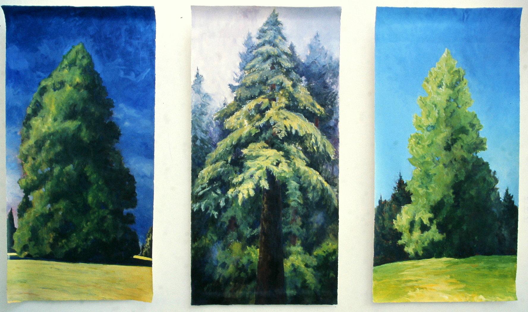 Tree Portraits, Installation