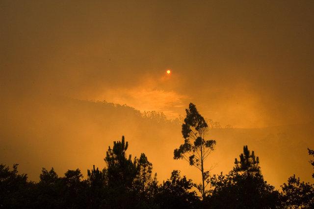 Bos Branden Spanje_11
