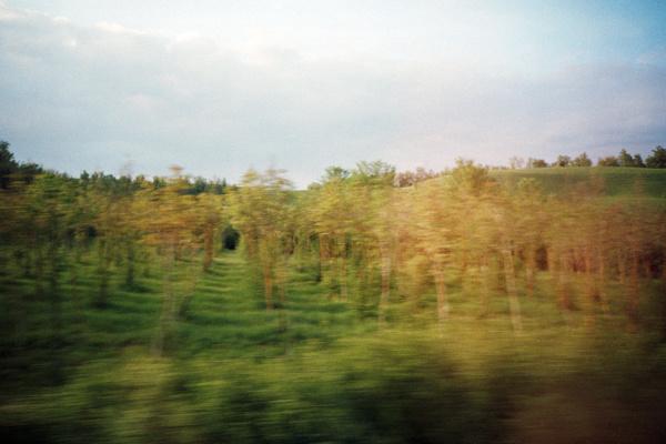 green by w-wb.jpg