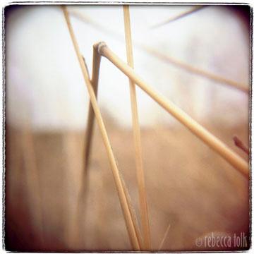 01-08-01-11 Bent Grass.jpg