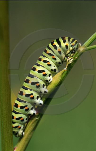 Tiere-Insekten-9.jpg