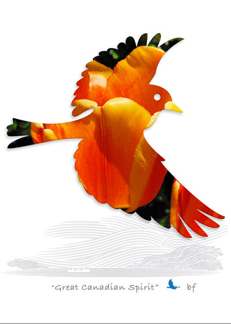 Bird-08.jpg