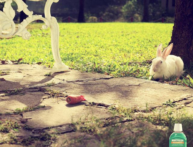 Sai Rabbit.jpg