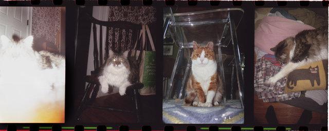 02catsFLATSHARP.jpg