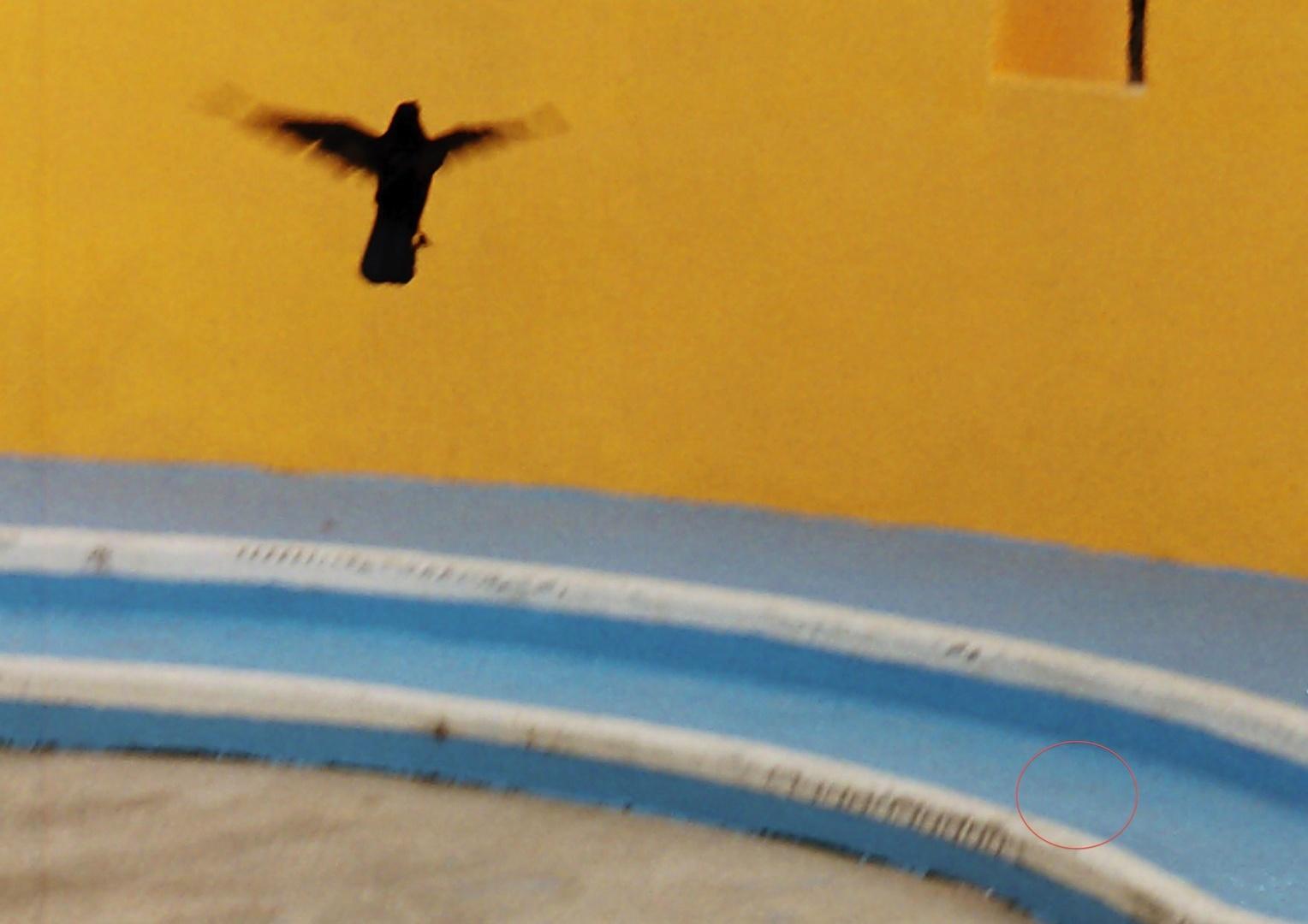 Rabe Flug.jpg