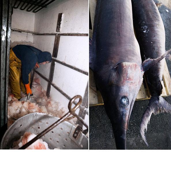 pêcheur thons 4.jpg