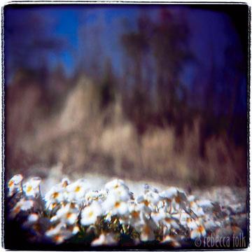 03-03-13-10 Popcorn Solstice.jpg