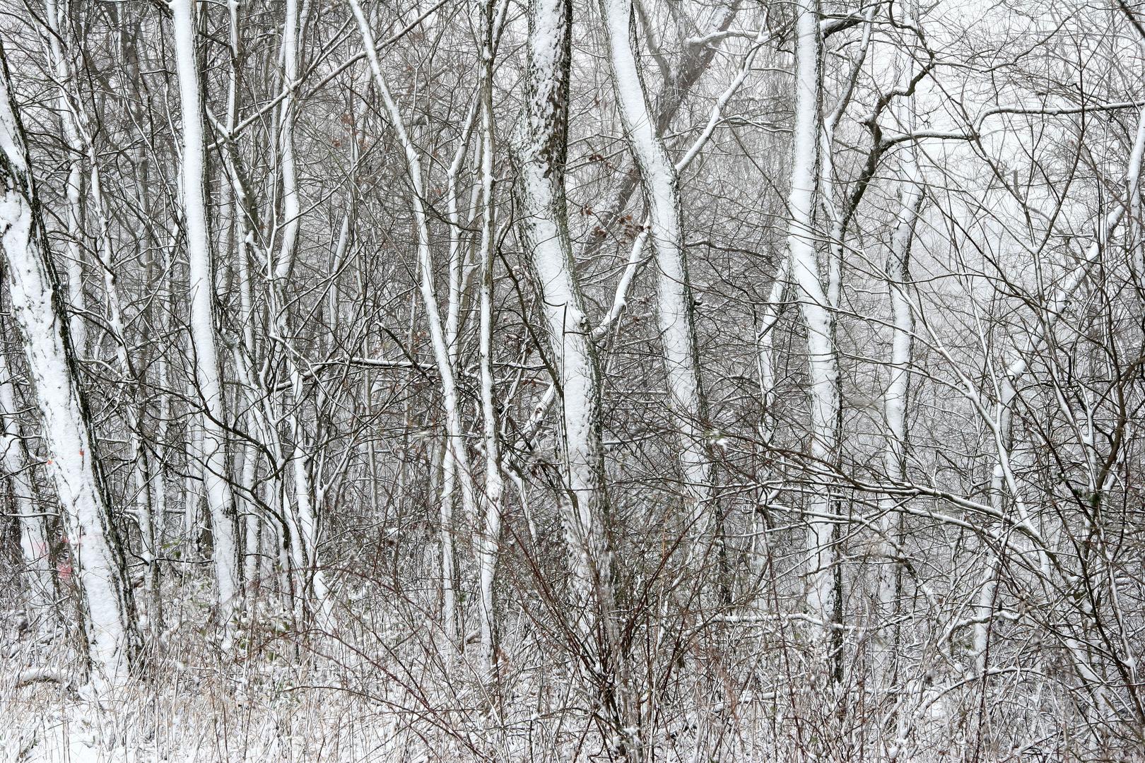 Nature's Chaos, Ohio