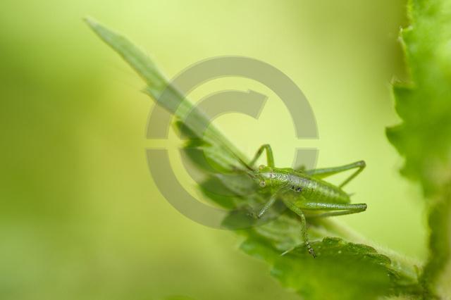 Insekten_Copyright_300.jpg