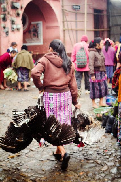 Bird Market I