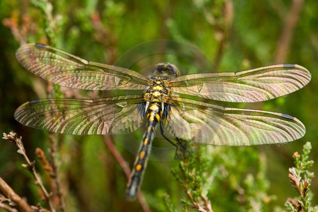 Insekten_Copyright_547.jpg