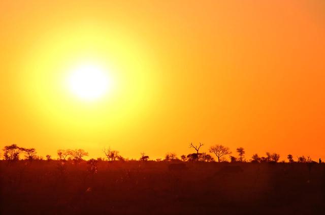 Rhinos at sunrise