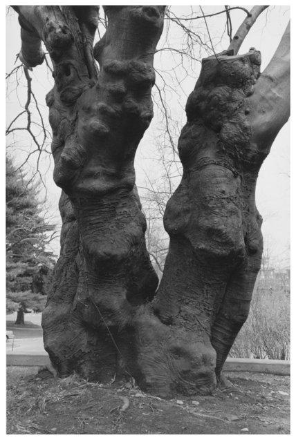 Trees  25.jpg
