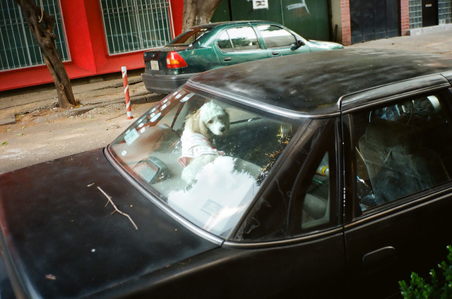 caniche et voiture noir - mex city.jpg